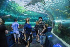 Séjours Agency Jeunes Ripley's Aquarium